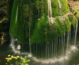 green, nature, and romania image