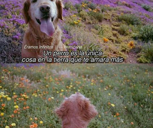 dog and frases image