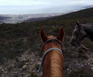 caballo, day, and travel image