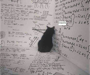 cat, lessons, and school image