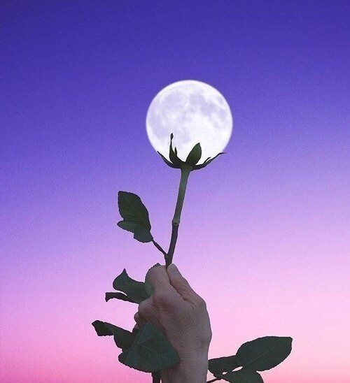 moon, flowers, and sky image