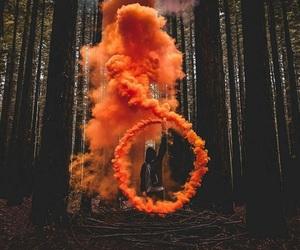 orange, forest, and beautiful image