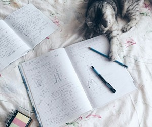 cat and inspiration image