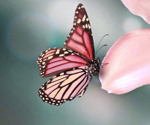 butterfly, pink, and flowers image