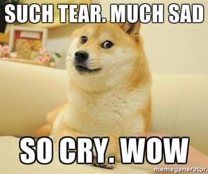 cry, wow, and dog image