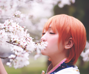 cherry blossom, love live, and anime cosplay image