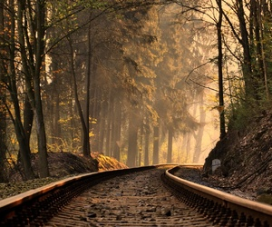 forest, nature, and train image