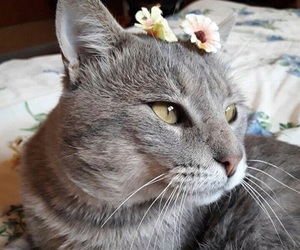 beautiful, cat, and gorgeous image