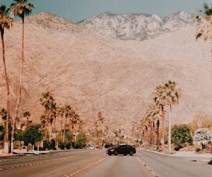 la, nature, and palm tree image