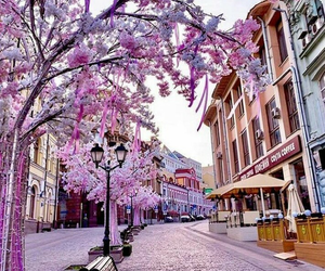 place, flowers, and city image