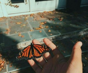 autumn, butterfly, and fall image
