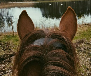 fall, horse, and nature image