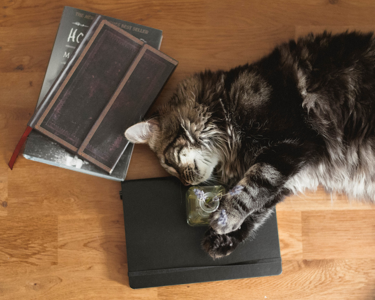 advice, books, and cat image