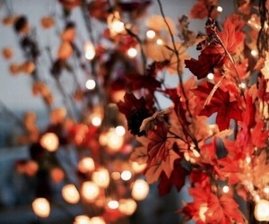 autumn, lights, and photography image