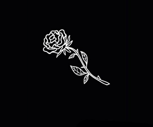 rose, black, and tumblr image