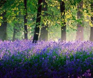 flora, lavender, and purple image