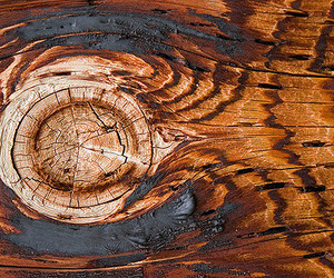 brown, wood, and wood grain image