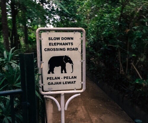 green, tropical, and elephant image