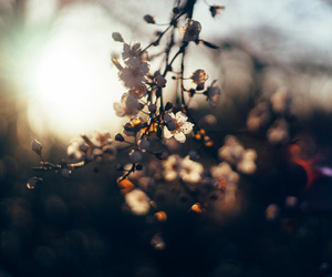 bokeh, flowers, and hd image