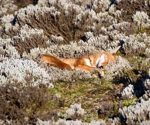animal, fox, and photography image