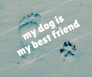 Best, best friend, and dog image
