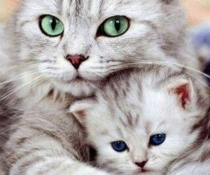 kitten and cats image