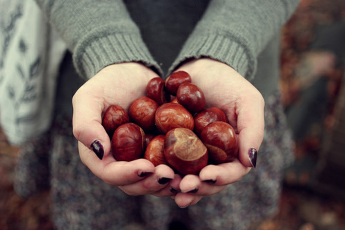 autumn, chestnut, and fall image