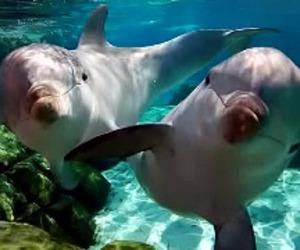 dolphin, animal, and sea image