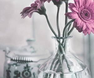 flower, pink, and vase image