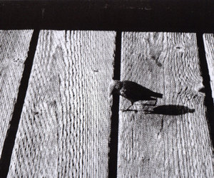bird, printing, and printmaking image