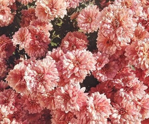 floral, flowers, and lovely image