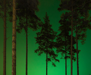green, landscape, and trees image