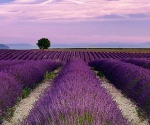 field, lavender, and hungary image