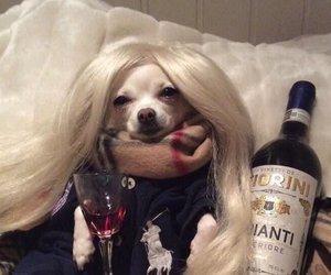 dog, lol, and meme image