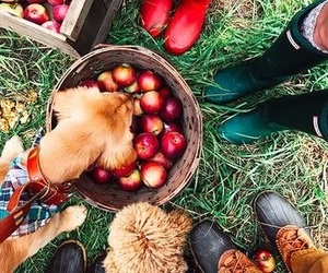 apples, brown, and love image