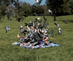 attack, thousands, and birds image