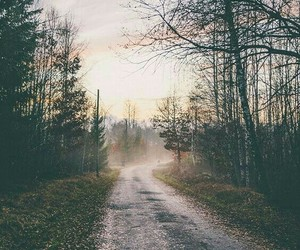 forest, nature, and street image