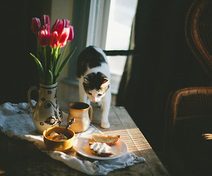 cat, flowers, and breakfast image