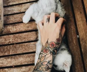 alternative, cat, and pet image