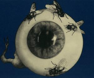 eye, eyeball, and fly image