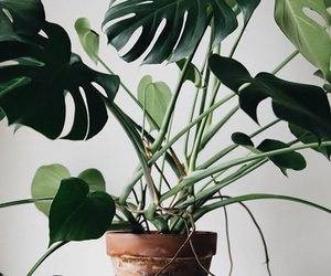 green, home, and plant image