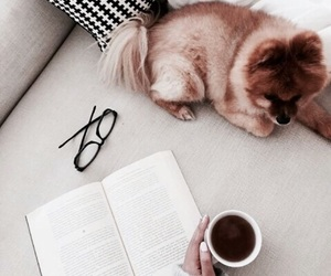 dog, book, and animal image
