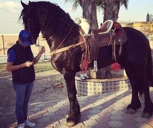 caballos, mexico, and friesian horses image