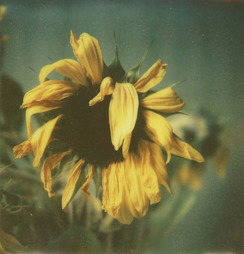 flower, vintage, and photography image