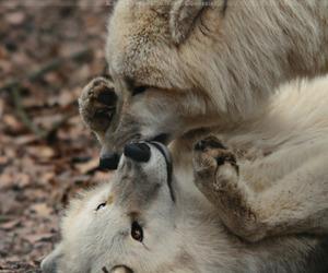 animal, beauty, and kiss image