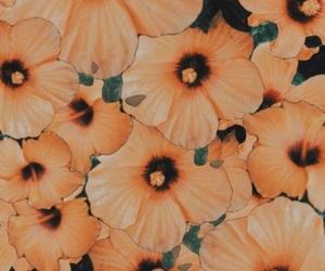 wallpaper, flowers, and orange image