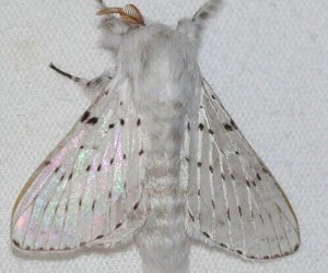 white and moth image
