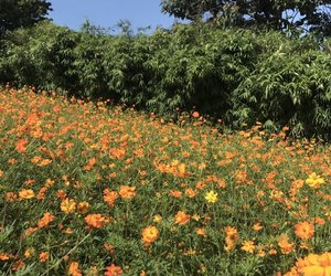 flowers, bts, and orange image