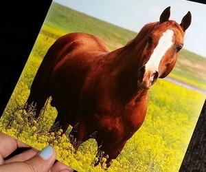 animal, postcard, and write image