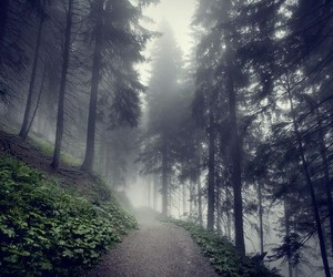 fog, foggy, and nature image